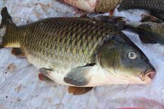 fish-at-market-in-kratie-cambodia-92.jpg (1600×1067)