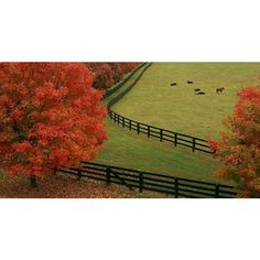 Kentucky's bluegrass region is easy to enjoy ❤ liked on Polyvore