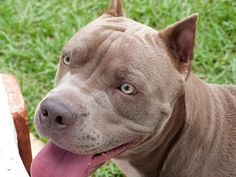 The pit bull was responsible for 263 deaths between Sept. 1982 and Dec. 2013.
