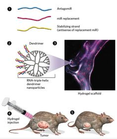 Anticancer microRNA Braids— RNAs wound together can replenish or diminish levels of miRNAs thrown into disarray by cancer