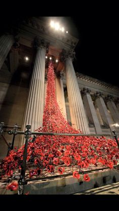 Liverpool Poppies at St George's Hall - see them lit up at night St George's Hall Liverpool, Liverpool Life, Liverpool History, Liverpool England, St Georges Hall, Birds In The Sky, Installation Art, Art Installations, Remembrance Day