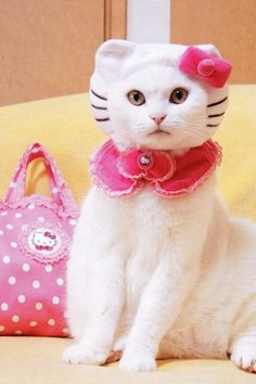 Photo: Do you like Hello Kitty? How about this REAL Hello Kitty? I Love Cats, Cute Cats, Funny Cats, Hilarious Animals, Adorable Kittens, Pet Halloween Costumes, Pet Costumes, Costume Ideas, Crazy Cat Lady