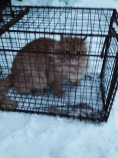 Found Cat - Domestic Long Hair - Simcoe, ON, Canada N3Y4K2 on February 09, 2015 (18:00 PM)