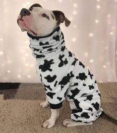 10 Dog Pajamas So Cute and Cozy You'll Want a Matching Pair
