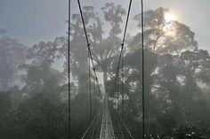 Destination Borneo - Naturalis Expeditions