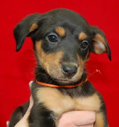 Hi my name is Kansas. I'm available for adoption through POET animal rescue. We're on facebook! www.facebook.com/POETAnimalRescue