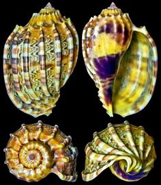 Art ideas# animals Beautiful Shells
