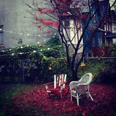 A fall afternoon in Vancouver.  Beautiful shot by Shannyn Higgins.