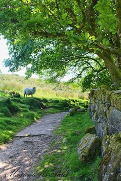 Dartmoor, England by The Magical Christmas Wreath Company Country Life, Country Roads, Country Living, Country Walk, Beautiful World, Beautiful Places, Beautiful Scenery, Foto Nature, Vie Simple