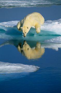 Ours polaire photo par Klein & Hubert Photographers