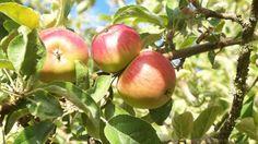 Choosing a site for growing organic fruit
