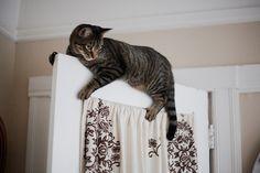 timefliestoday:  doorcat by ashley_tarr on Flickr.