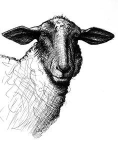 Limited edition print of the ink drawing Sheep by ENAMOREDstudios, $15.00