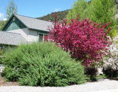 "Rocky Mountain Gardener: ""Dwarf"" Artic willow Part Sun Perennials, Dwarf, Rocky Mountains, Arctic, Landscape, Landscaping Ideas, Plants, Gardens, Image"