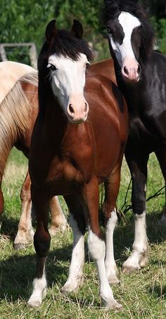 Equine - Photograph - from Equine Beasties