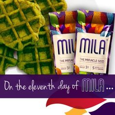 On the eleventh day of Mila, check out this recipe for green Mila waffles. Ideal for a family holiday brunch, the color of these waffles will impress the kids...and they'll love the taste, too! Add some strawberries for extra red and green cheer.    http://www.mylifemax.net/recipes/breakfast/green-mila-waffles/ #lifemax #12daysofmila