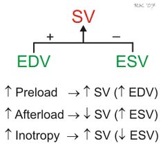 stroke volume regulation SV=EDV-ESV= 120ml/beat - 50ml/beat=70ml/beat End Diastolic Volume (EDV): the amount of blood that collects in a ventricle during diastole End Systolic Volume (ESV): the amount of blood remaining in a ventricle after it has contracted.