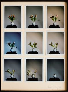 https://flic.kr/p/DPjgaC | Drying Tulips I-IX | Artfinder link www.artfinder.com/product/drying-tulips-i-ix/ Polaroid color photography 9 photographs 8,5 x10x5 cm mounted on 30x40 cm matt.  Film Fujifilm FP-100C, camera Polarid Land 180   Photographs taken 2 - 10 Februay 2016 Day 1 - Cloudy day Day 2 - Very dark cloudy day with rain Day 3 - Sunny day with clouds on the sky Day 4 - Clear blue sky but the Sun is behind a cloud Day 5 - Sunny day, clear sky Day 6 - Sunny day with some very high…