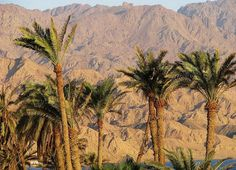 Mt Sinai, Egypt. FACT: The summit of the mountain has a mosque that is still used by Muslims.