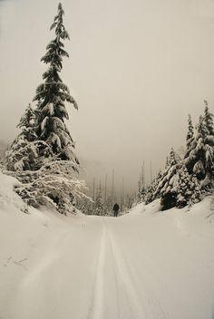 White Silence winter photography  landscape fine by yuliartstudio, $9.00