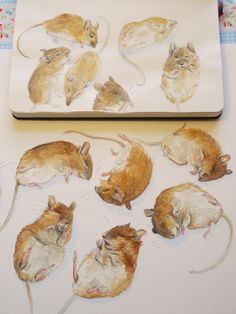 Vanessa Cabban - this reminds me of Beatrix Potter