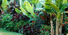 Lush underplanting