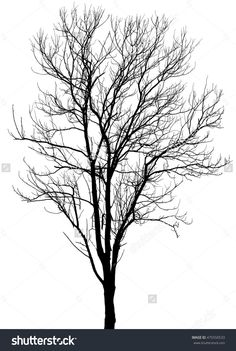 Tree silhouette, Dry Tree Or Dead Tree on white on background.  #tree #dry #dead…