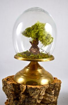 Tree terrarium, beautiful CUSTOM intitials tree terrarium- hand sculpted by uniqueleeart
