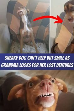 #Sneaky #dog #help #smile #grandma #looks #dentures Mini Tattoos, Foot Tattoos, Finger Tattoos, Cute Little Puppies, Cute Puppies, Jewelry Wall, Nail Jewelry, Prom Hair Medium, Happy Birthday Flower