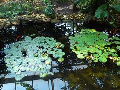 :) Flora, Plants, Plant, Planting