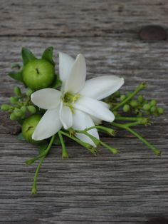 dragonfly floral: boutonniere