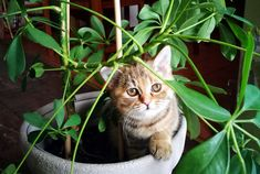 One of the easiest ways to breathe some life into a room is with the addition of a plant or two. Plants not only add colour but many houseplants also have air-purifying properties. The drawback, though, is that some of the most popular houseplants are also toxic to pets and children. If you want to spruce up your home without the worry, consider these plants instead. They are non-toxic so your pets and kids will be safe even if they tend to nibble on the décor.