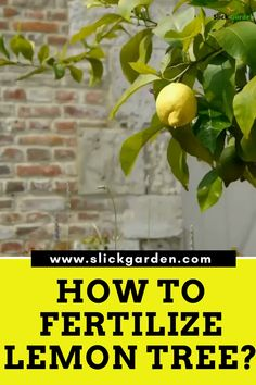 HOW TO FERTILIZE LEMON TREE? The second method is to use commercial fertilizer. Always pick citrus fertilizer for lemon trees. These citrus fertilizer are specialized for lemon trees and comes with trace elements. So you don't have to buy them separately