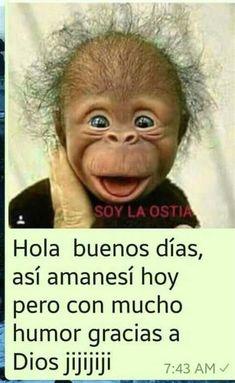 Funny Spanish Jokes, Spanish Humor, Spanish Quotes, Morning Messages, Morning Greeting, Good Morning In Spanish, Cute Good Morning Quotes, Funny Quotes, Funny Memes