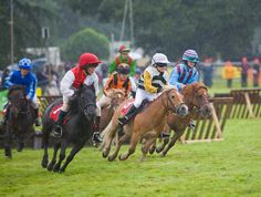 Shetland Pony Grand National - had to put this in :O
