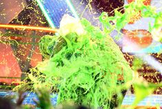 Jesse McCartney Slimed ►KCAs 2009