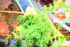 Lucas Cruikshank as Fred Figglehorn Slimed ►KCAs 2010