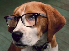 Smart beagle, wish they cal all be like this.