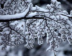 Imagem de winter, snow, and tree