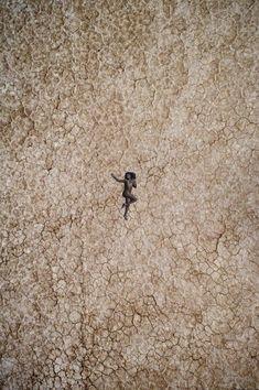 myre single damer