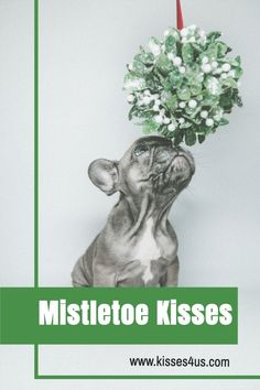Do you have someone special to share Mistletoe Kisses with this year? If yes, you need Kisses 4 Us! Order now so that you will be ready to Countdown to Christmas with Kisses!