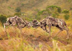 An Artist Creates Stunning Animal Sculptures Using Driftwood http://www.wimp.com/animal-driftwood/