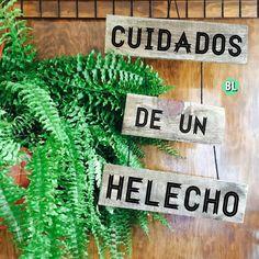 Aprende estos consejos sencillos para tener los helechos más hermosos que hayas visto. Types Of Succulents Plants, Planting Succulents, Planting Flowers, Moss Garden, Forest Garden, Garden Ornaments, Plant Care, Garden Projects, Container Gardening