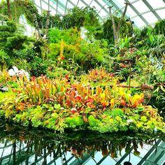 【kacha0825】さんのInstagramをピンしています。 《これは本物。 #シンガポール#singapore #trip#旅行#海外旅行#クラウドフォレスト#cloud#forest#ガーデンズバイザベイ#gardens#by#the#bay#植物園#森#自然#植物#マイナスイオン #green #水辺#花#Flower》