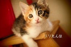 里親さんブログポワンポワンちゃん多し - http://iyaiya.jp/cat/archives/76717