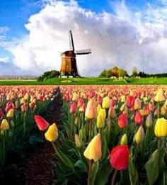 I'd like to go to the Netherlands to see all of the varieties of tulips
