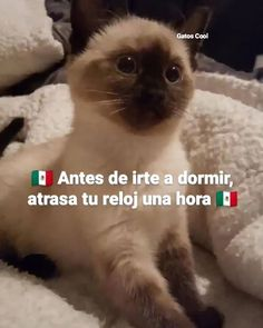 "64 Me gusta, 2 comentarios - Gatos Cool (@gatoscooloficial) en Instagram: ""horario de invierno, no se te olvide. . . . #memesdegatoscool #gatoscool😸 #gatos_cool…"""