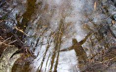Cielo de arboles by Rodrigo Santana on 500px Moth, Insects, Snow, Photography, Animals, Outdoor, Sky, Outdoors, Photograph