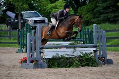 Rob says this New Forest pony/British riding pony cross, has super knees. click to read more of his comments on this pony.