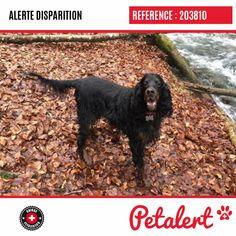 Cette Alerte (203810) est désormais close : elle n'est donc plus visible sur la plate-forme Petalert Suisse. Nous avons retrouvé notre animal Merci pour votre aide. Visible, Aide, Dogs, Switzerland, Thanks, Shape, Animaux, Pet Dogs, Doggies